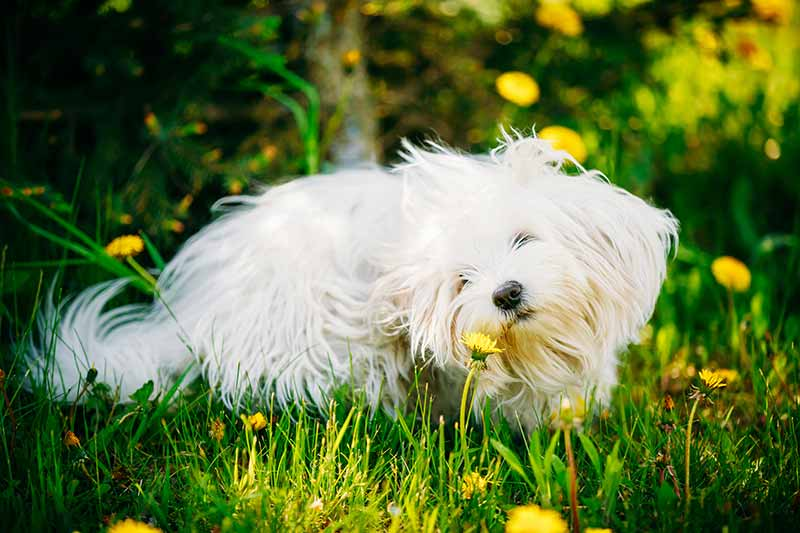 Outdoor pet safety keeps your pet safe in the yard and garden, all year long