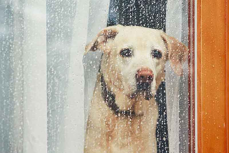 Rainy day activities for pets can help with pet exercise and pet boredom.