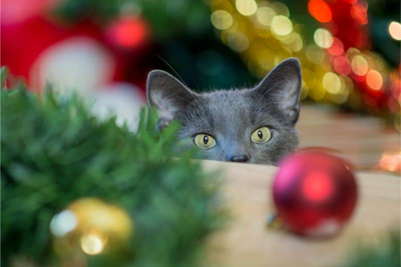 A cat amongst holiday decorations