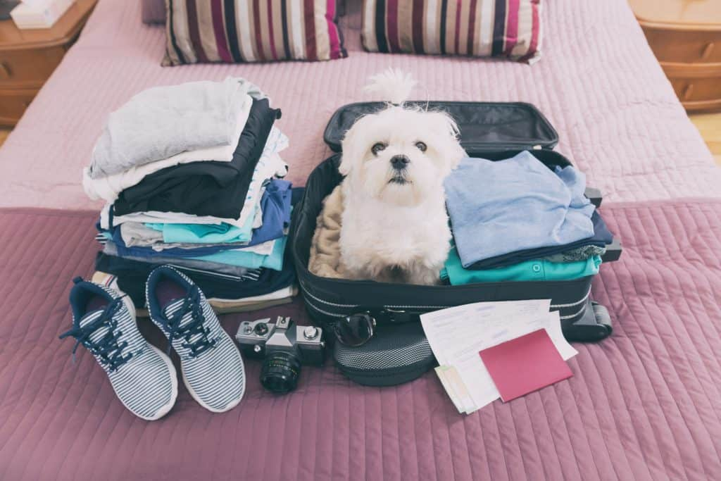 Dog in suitcase.