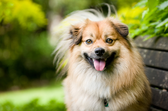 A dog smiling