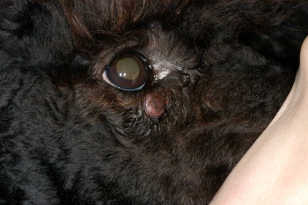 Tumors in Dogs and Cats — Non-cancerous Tumors ...
